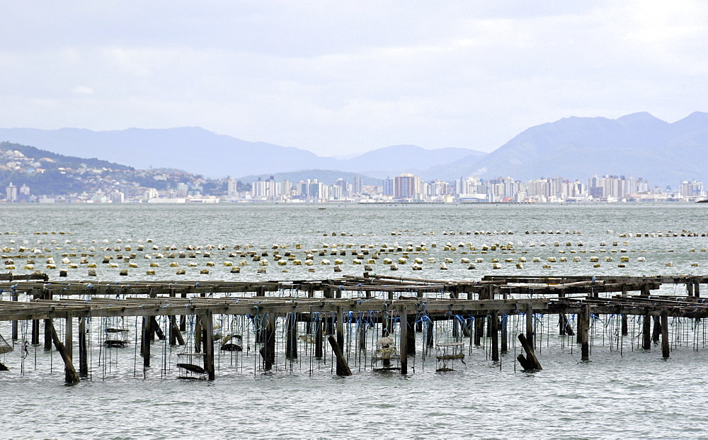 Oyster farming, South Bay, Florianopolis, Santa Catarina, Brazil, South America