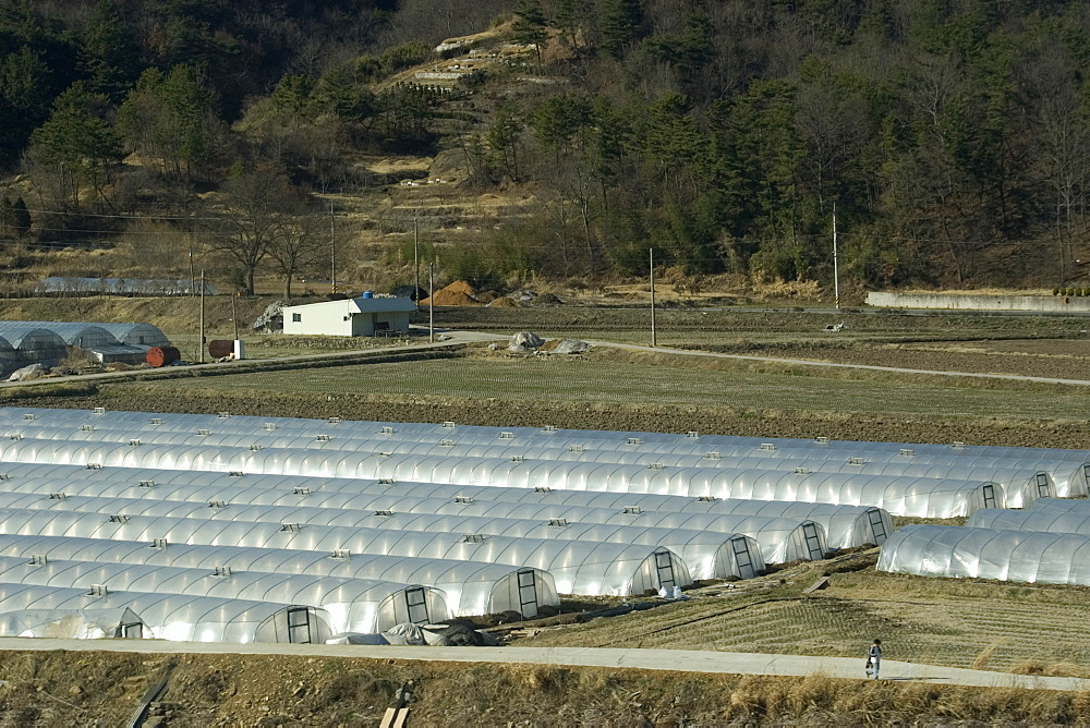 Many crops are grown in greenhouses to protect against the harsh weather, South Korea, Asia