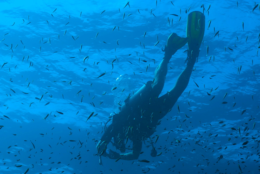 Scuba diver underwater, Southern Thailand, Andaman Sea, Indian Ocean, Southeast Asia, Asia - 921-1312