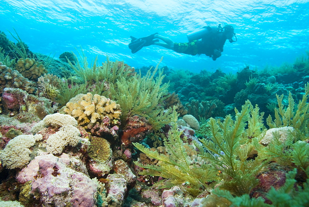 Scuba Diving. Cains, Queensland, Australia