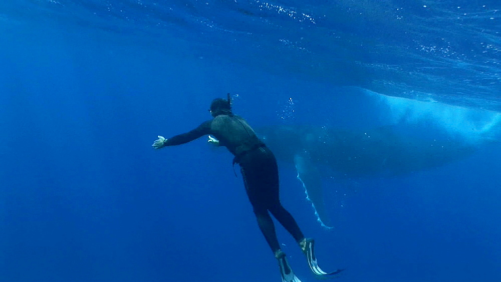 Snorkeler and humpback whale (Megaptera novaeangliae). Man and animal interactions. Tonga, South Pacific - 926-6