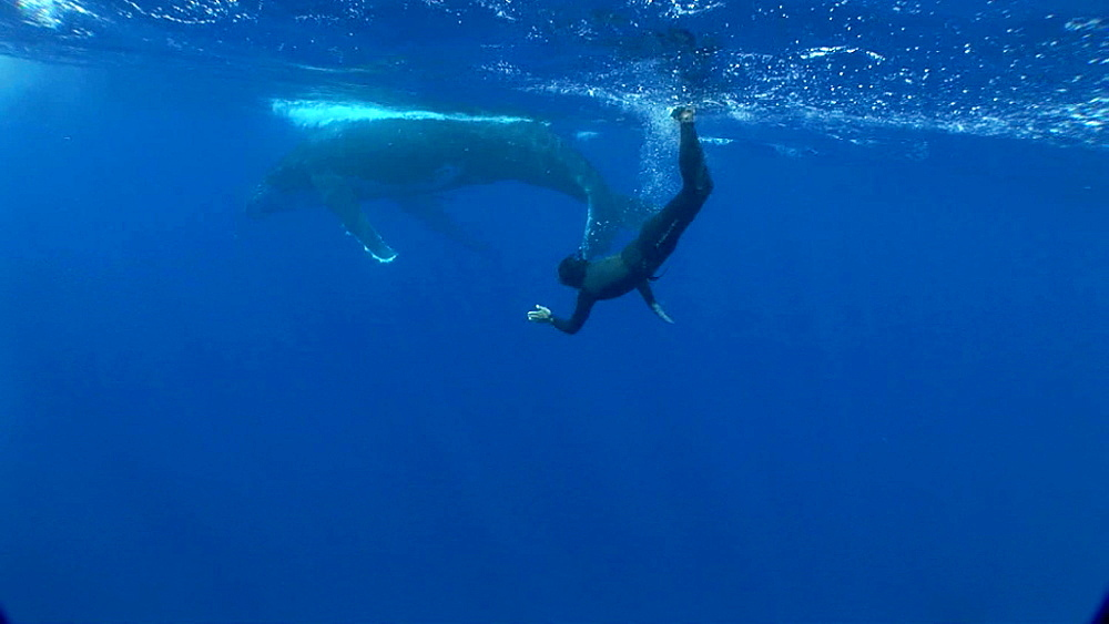 Snorkeler and humpback whale (Megaptera novaeangliae). Man and animal interactions. Tonga, South Pacific - 926-9