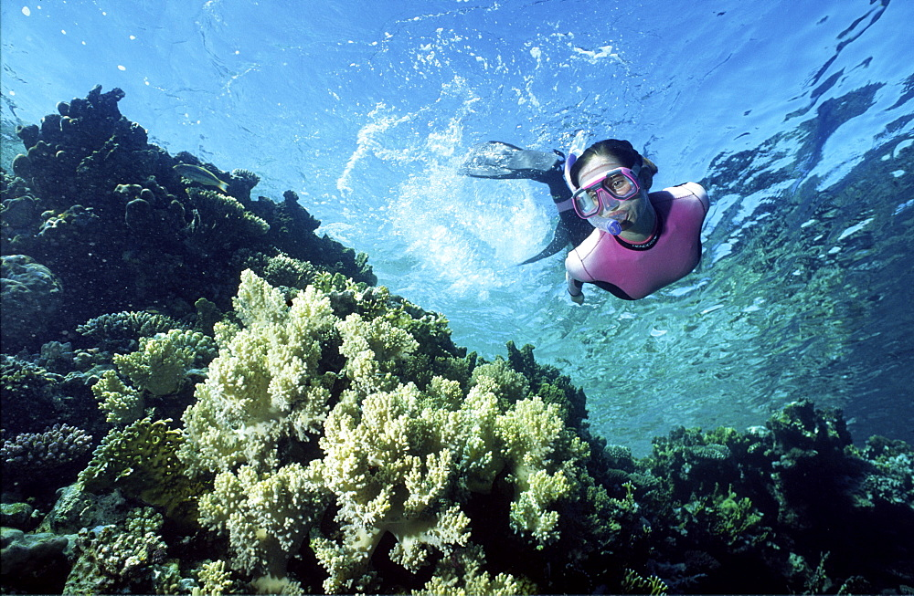 Free diver over colourful reef scene