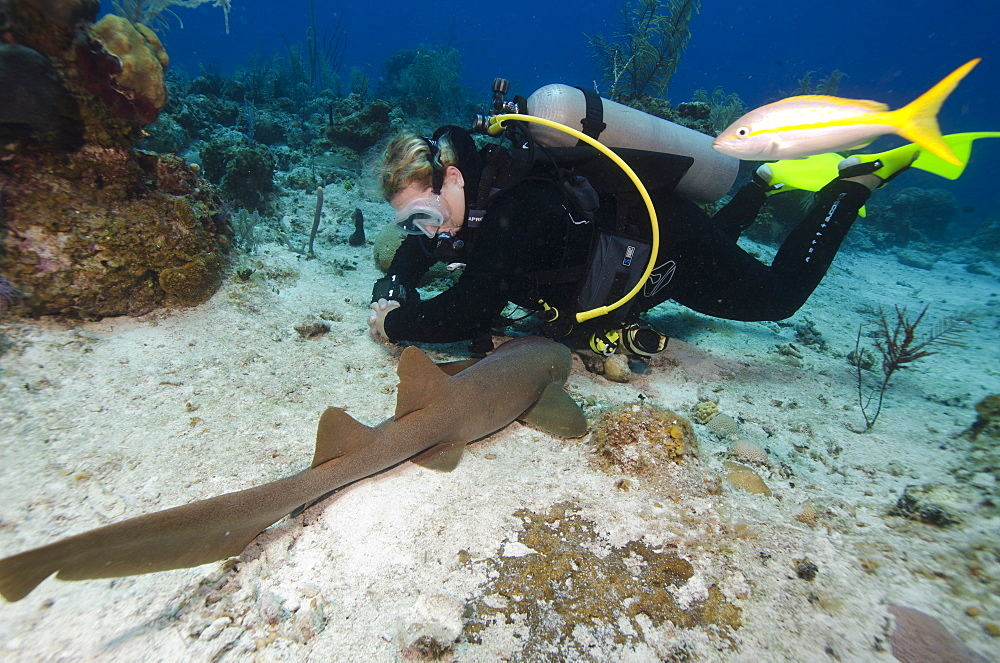 Nurse shark resting near a diver in the Turks and Caicos, West Indies, Caribbean, Central America