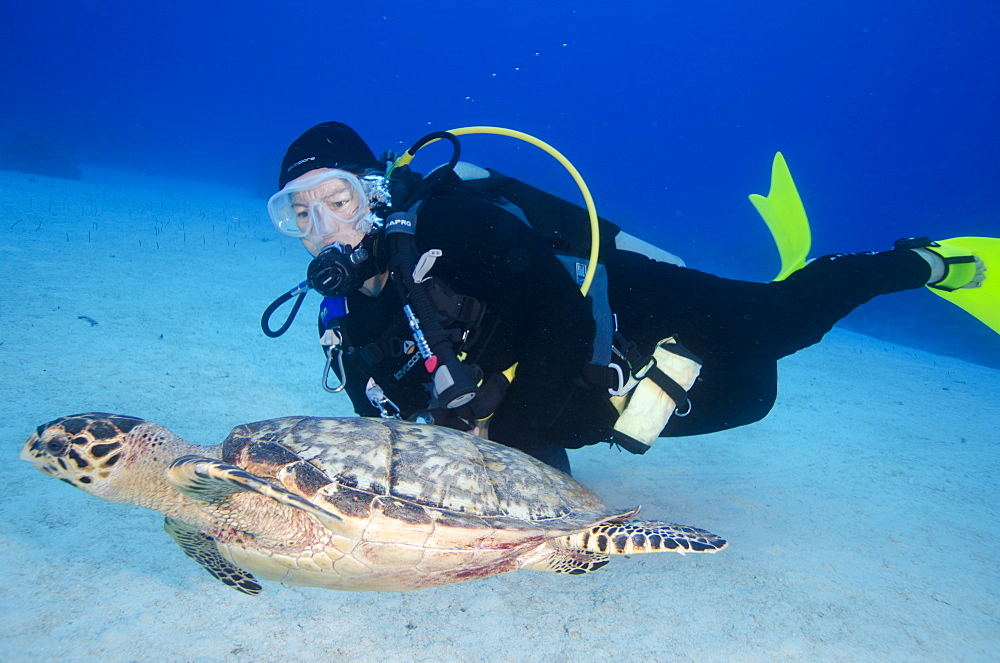 Green turtle cruising the reef with diver, Turks and Caicos, West Indies, Caribbean, Central America