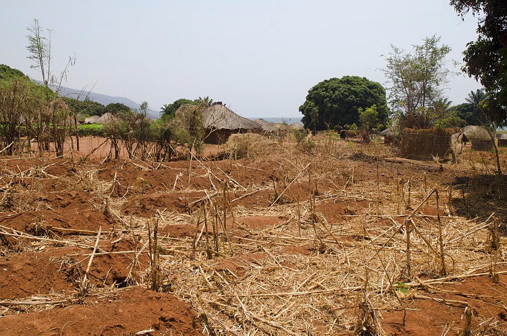 Dry crops in a village in Africa, Talpia, Zambia, Africa