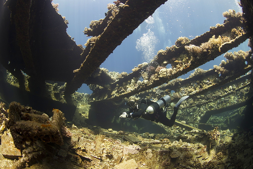 Diving the wreck of The Giannis D, Red Sea, Egypt, North Africa, Africa - 934-692