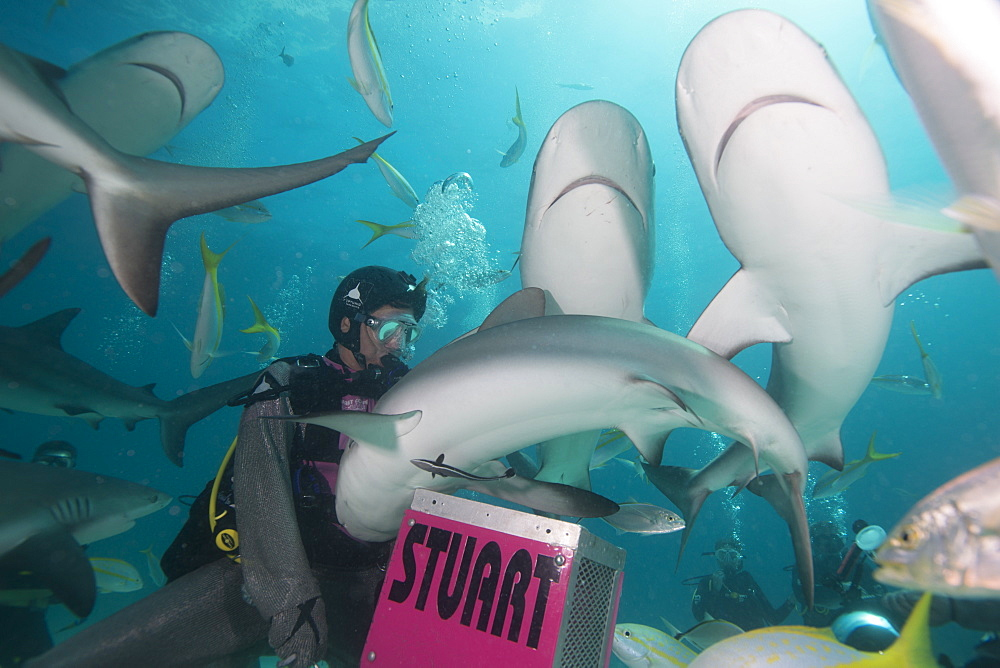 Shark feeding at Stuart Cove, Bahamas, West Indies, Central America - 934-720