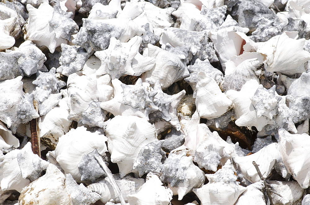 Pile of conch shells, Turks and Caicos, West Indies, Central America - 934-730