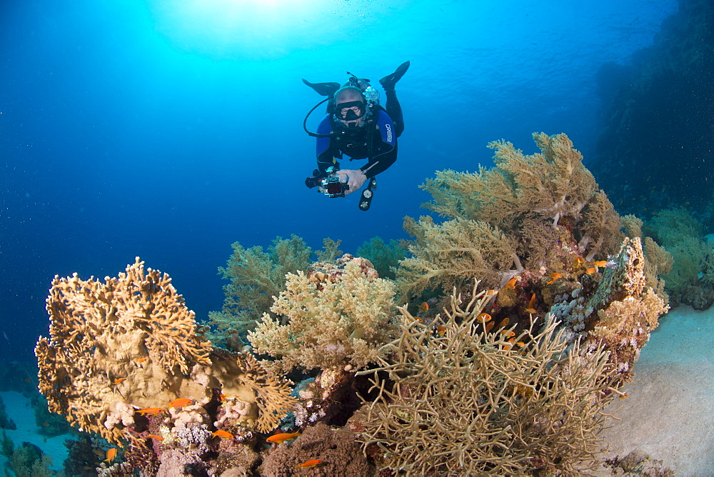Camera being used by diver underwater in the Red Sea, Egypt, North Africa, Africa - 934-750