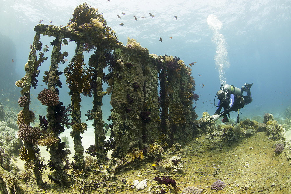 Camera being used by diver underwater on the Yolanda wreck in the Red Sea,. Egypt, North Africa, Africa - 934-752