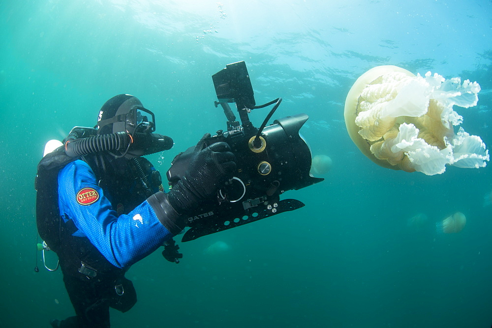 Diver with giant barrel jellyfish off the South Coast, Devon, England, United Kingdom, Europe - 934-764