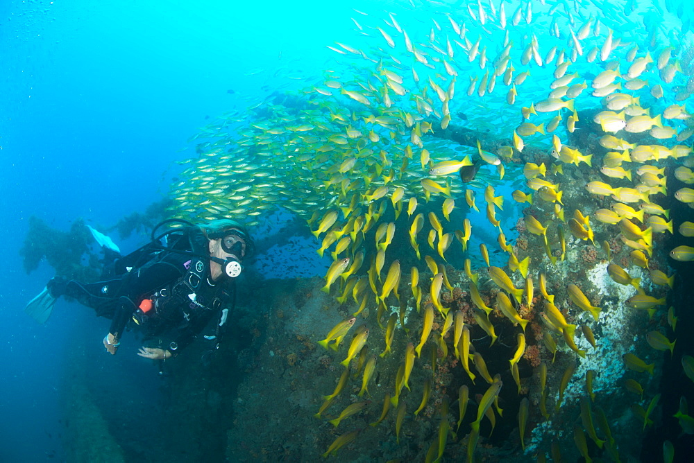 Diver swimming amongst the schooling fish on a ship wreck in Nosy Be, Madagascar, Indian Ocean, Africa - 934-767