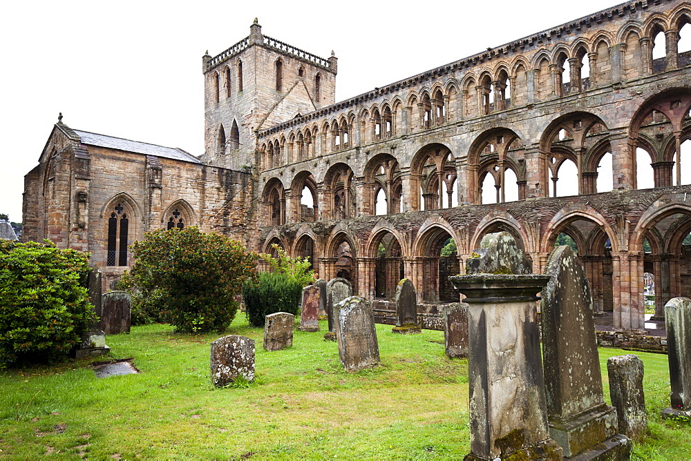 Jedburgh Abbey dating from the 12th century, Jedburgh, Scottish Borders, Scotland, United Kingdom, Europe