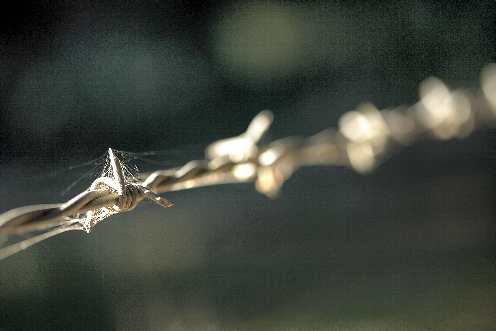 Barbed wire close up in shaft of sunlight, Hopkins Creek, New South Wales, Australia, Pacific