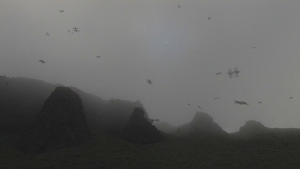 Thick mist over coastal crags with birds (currently unidentified) wheeling overhead. Northern Pacific, Aleutian Islands. Alaska - 959-236