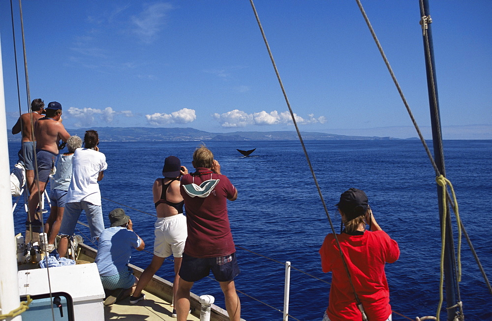 85001100LS.jpg / Sperm Whale  (Physeter macrocephalus) flukes, whale watching.  Azores - 969-217