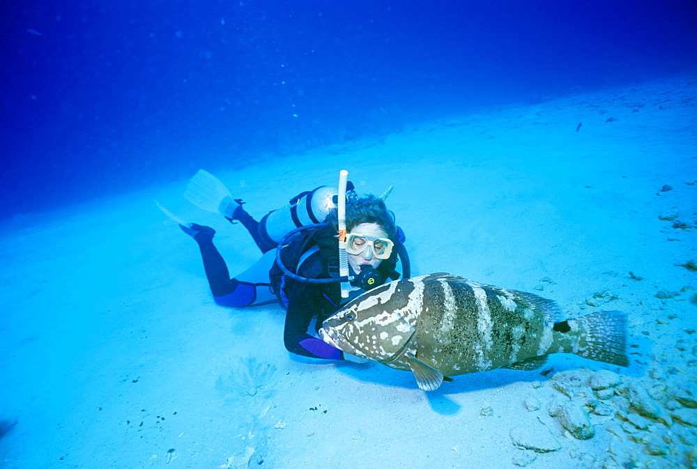 Diver and Nassau grouper (Epinephelus stratus). Atman Islands.