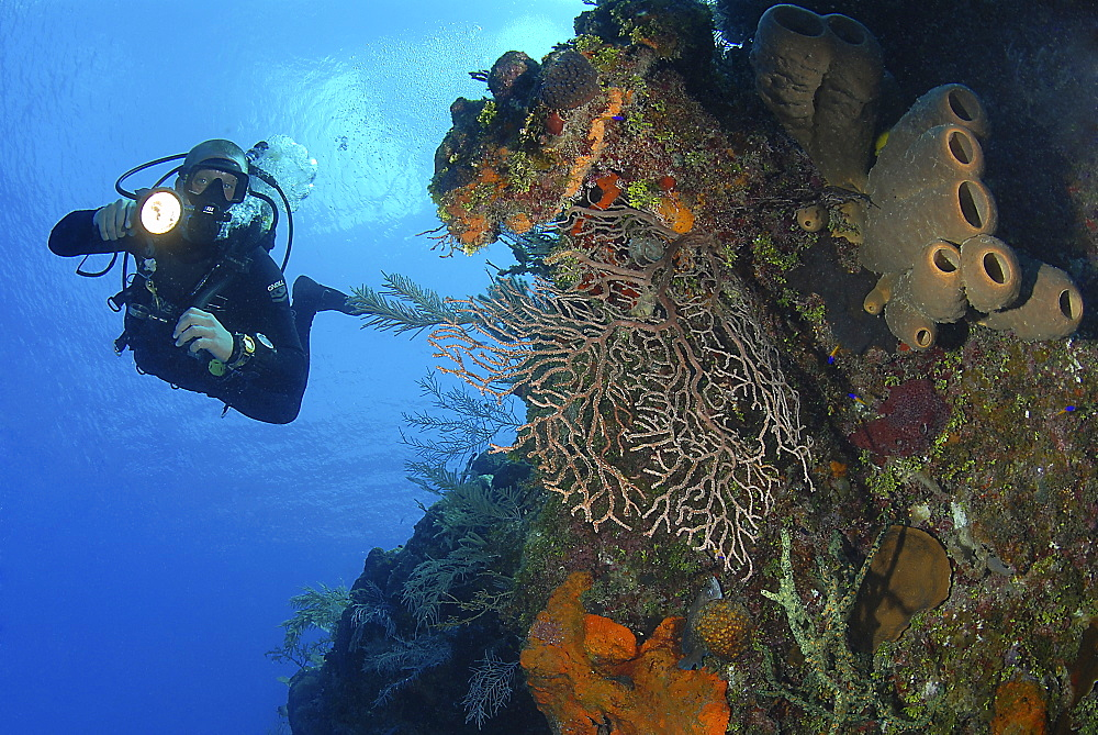 Diver using torch amidst corals, sea fans and sponges, Grand Cayman Island, Cayman Islands, Caribbean - 970-807