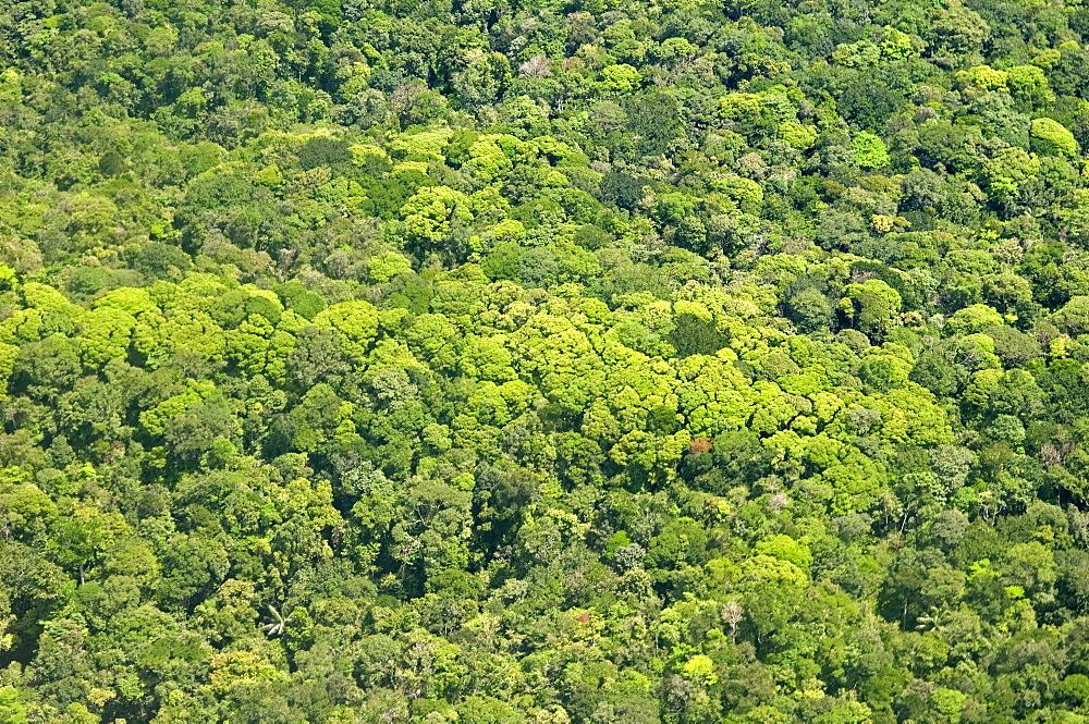 Aerial view of pristine rainforest canopy, Guyana, South America