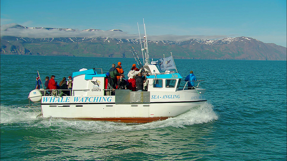 Whale watching boat looking for humpback whales. Iceland, N Atlantic - 972-35