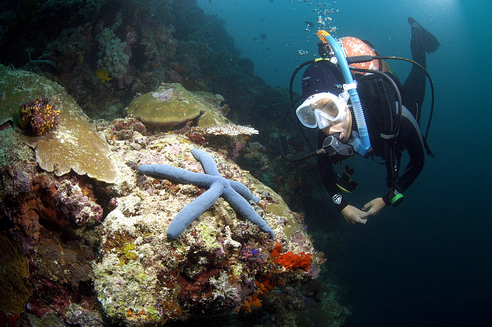 Diver and Sea Star (Linckia laevigata). Borneo, Malaysia   (RR) - 973-52