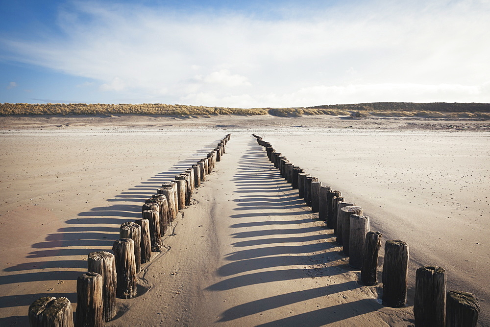 Wooden groynes on a sandy beach, leading to sand dunes, Domburg, Zeeland, The Netherlands, Europe  - 974-369