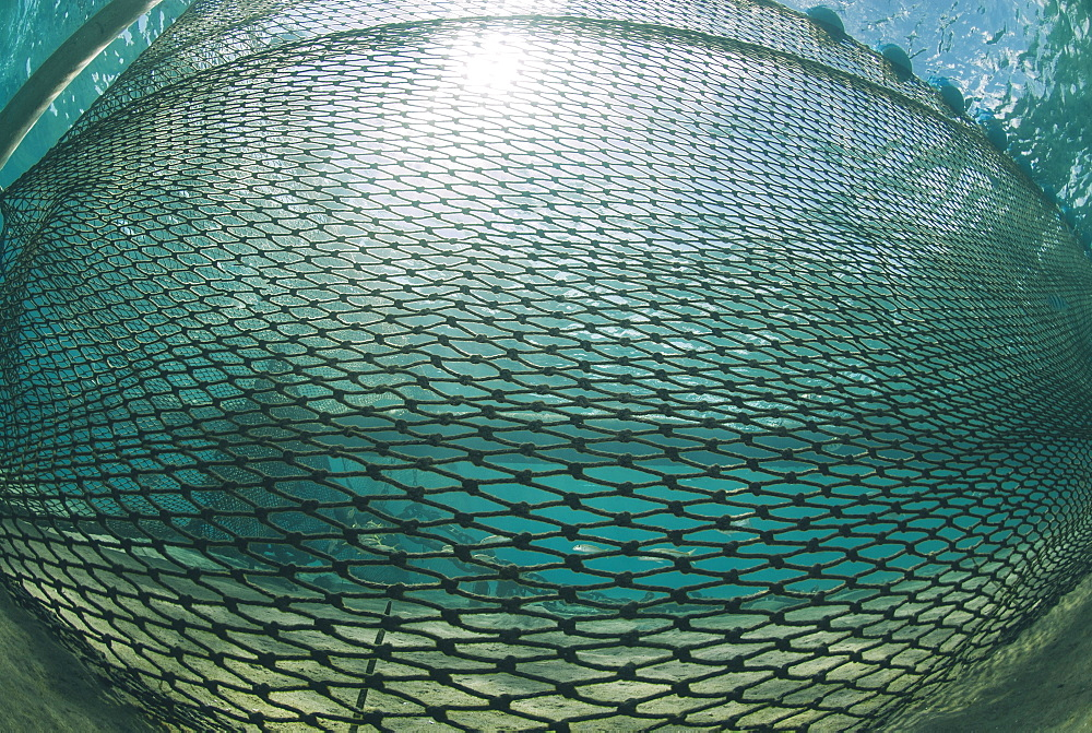 Shark net set in shallow water, Naama Bay, Ras Mohammed National Park, Sharm El Sheikh, Red Sea, Egypt, North Africa, Africa - 974-412