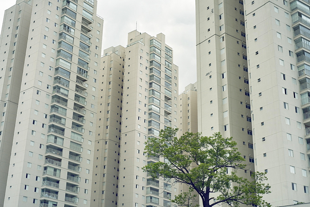 Imposing residential developments overshadow their surroundings and a stark contrast to the lone tree, Central Sao Paulo area, Brazil, South America - 975-324