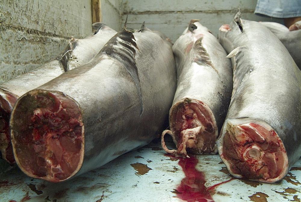 Various types of billfish. Uncontrolled fishing in Ecuador.  - 978-230