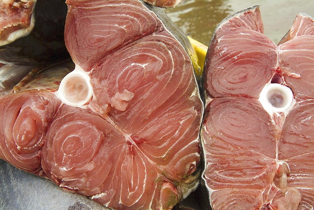 Various types of billfish. Uncontrolled fishing in Ecuador. - 978-242