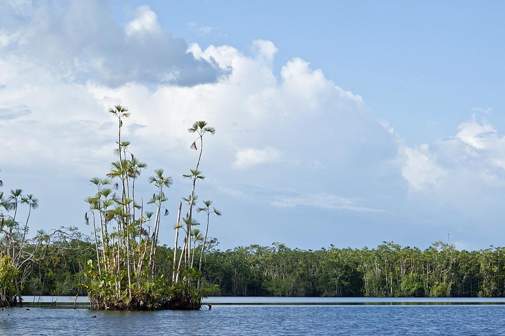 Plant life in Ecuadorean Amazon - 978-373