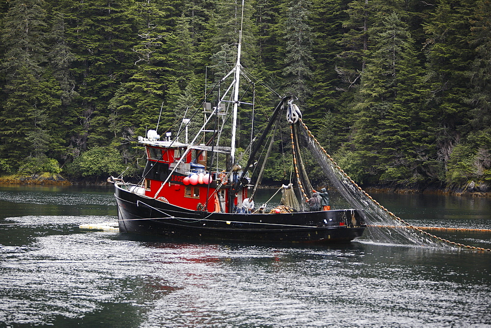 Purse-seiners operating in Red Bluff Bay, Baranof Island, Southeast Alaska. These vessels are fishing for salmon. No property or model release.