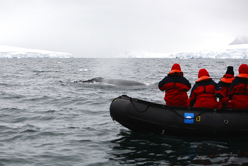 Whale watchers with an adult Humpback Whale (Megaptera novaeangliae) in Wilhelmina Bay, Antarctica.