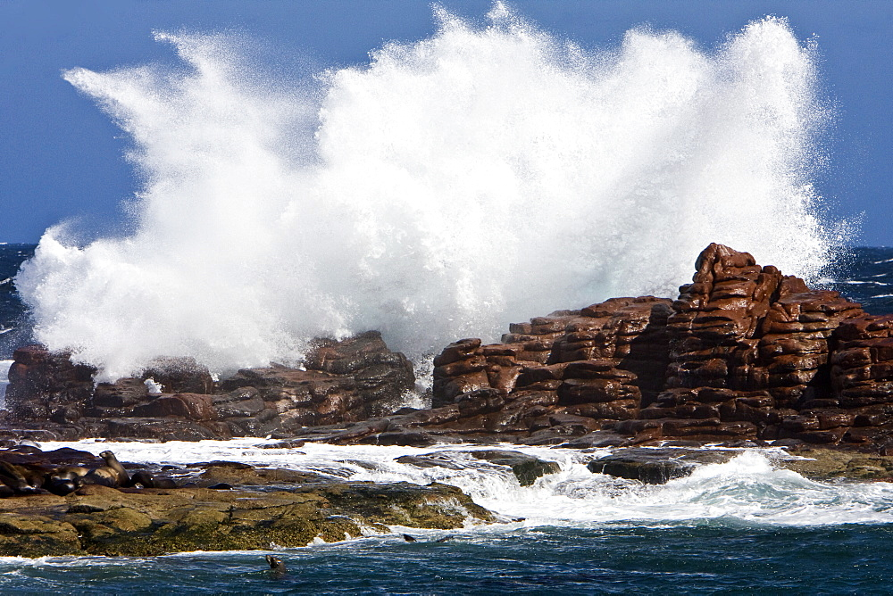 Huge waves pounding Los Islotes (The Islets) in the southern Gulf of California (Sea of Cortez), Baja California Sur, Mexico. Los Islotes is a California sea lion (Zalophus californianus) breeding area as well as a nesting area for several species of seabirds.