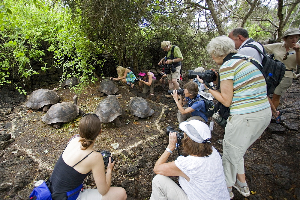 Photographers with captive Galapagos giant tortoise (Geochelone elephantopus) at the Charles Darwin Research Station on Santa Cruz Island in the Galapagos Island Archipelago, Ecuador