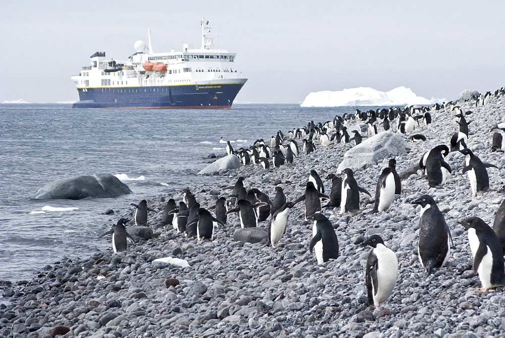 The Lindblad Expedition ship National Geographic Explorer operating in and around the Antarctic peninsula in Antarctica. Lindblad Expeditions pioneered expedition travel for non-scientists to Antarctica in 1969 and continues as one of the premier expedition companies to travel to Antarctica even today.
