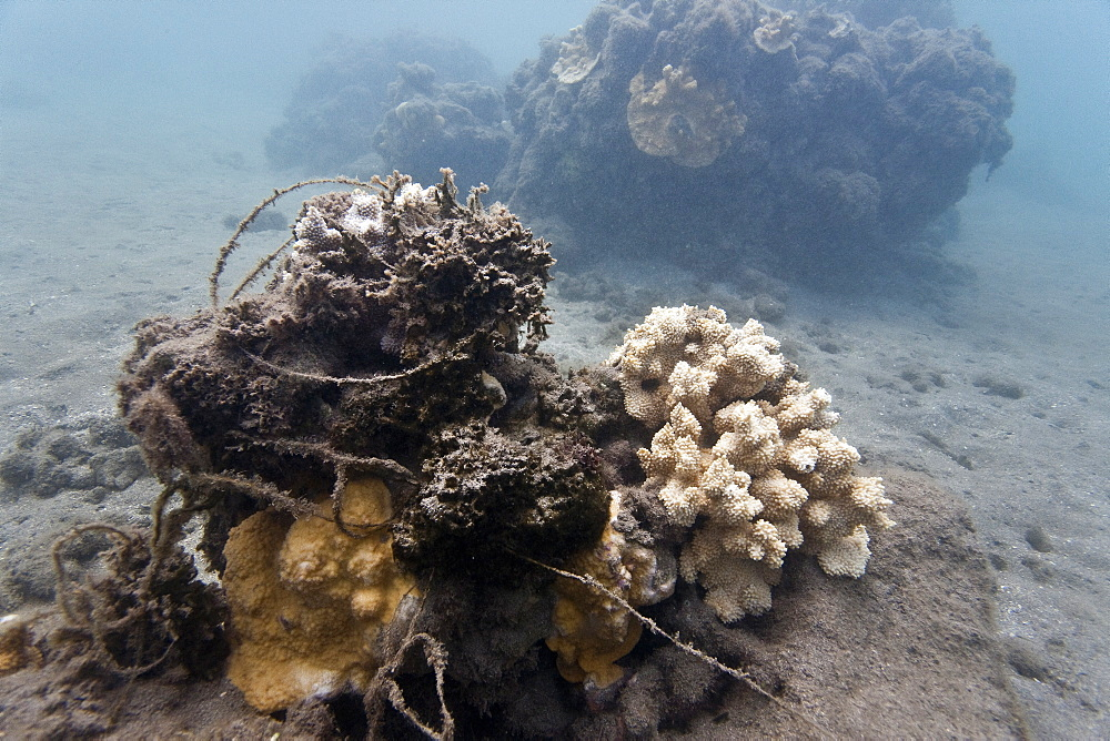 View of tangled fishing line at Olowalu Reef on the west side of the island of Maui, Hawaii, USA.