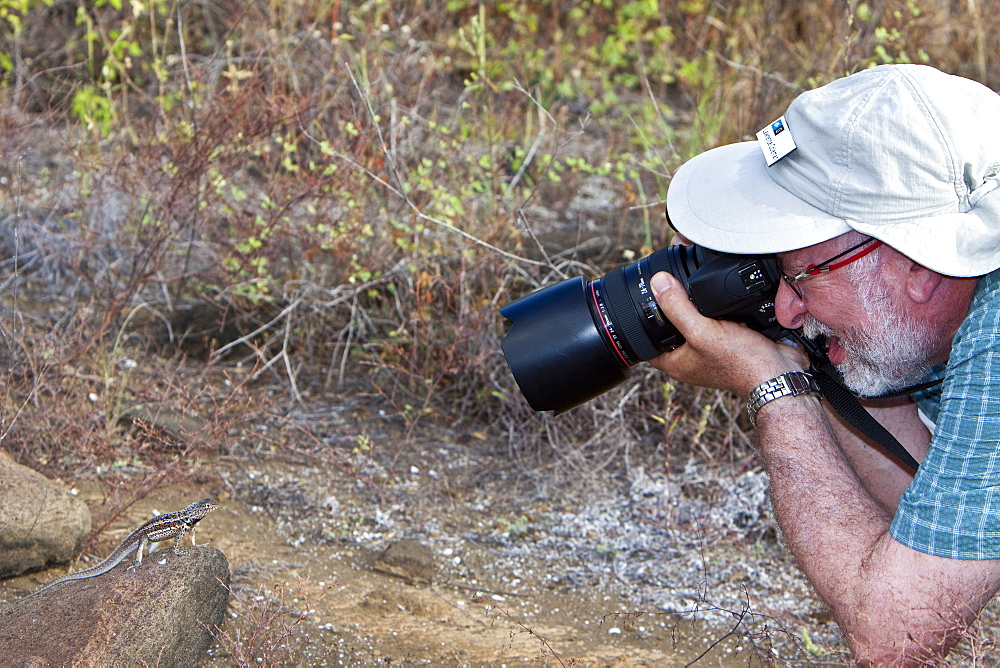 Photographer taking an image of a lava lizard (Microlophus spp) in the Galapagos Island Archipeligo, Ecuador. MORE INFO: Many of the islands within the Galapagos Island Archipeligo have their own endemic species. No model release is available for this image.