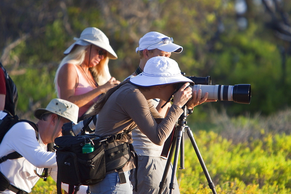 Lindblad Expeditions Guests photographing exciting things in the Galapagos Island Archipeligo, Ecuador. No model or property release are available for this image.