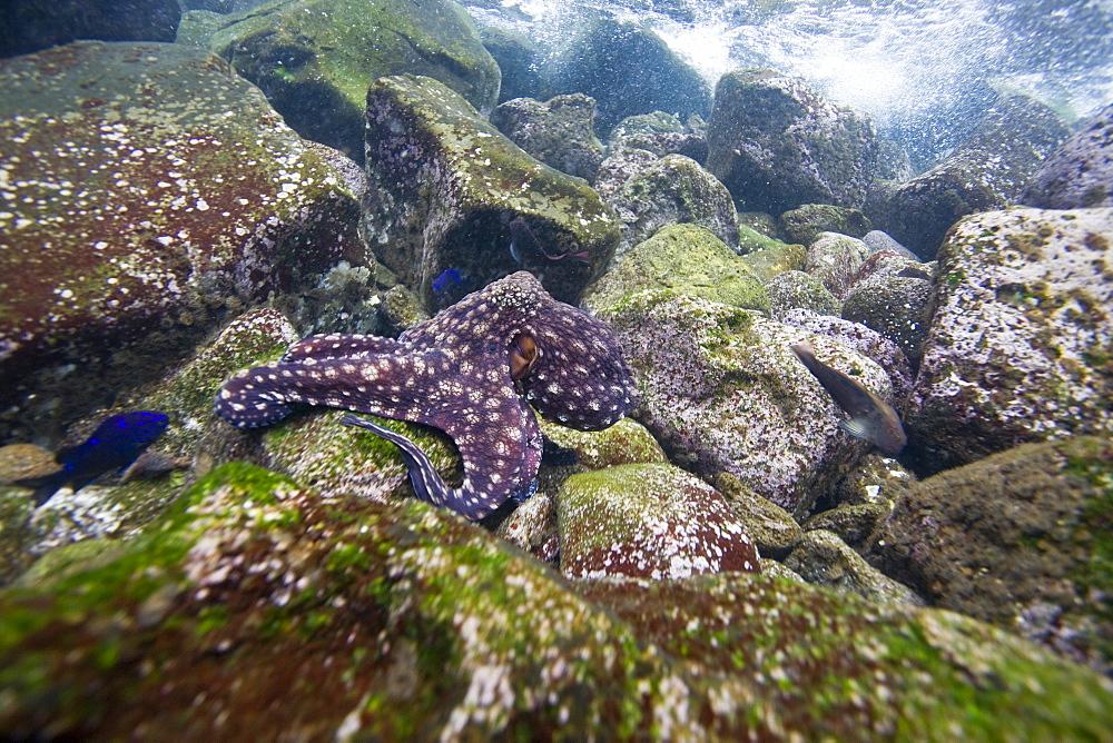 Underwater scenes from the Galapagos Island Archipeligo, Ecuador. Pacific Ocean.