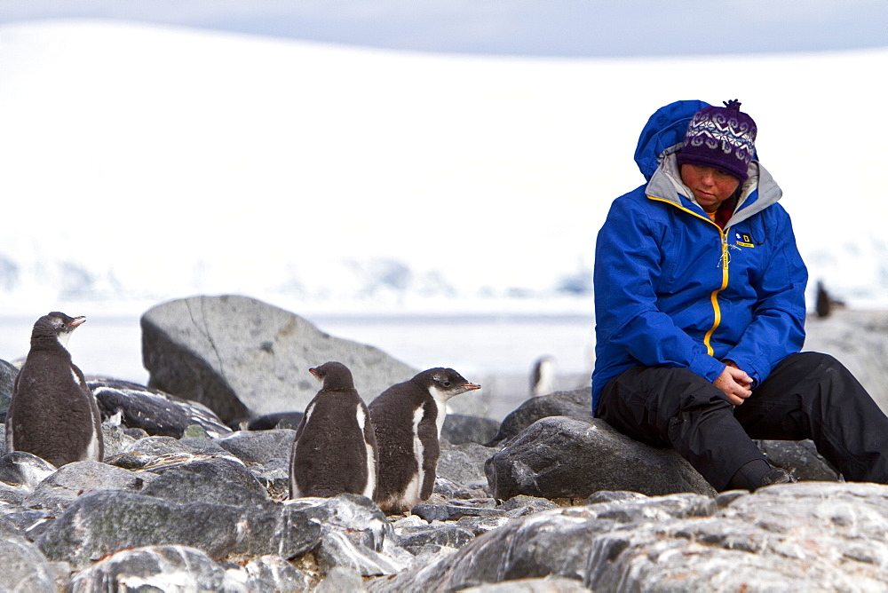 Guest from the Lindblad Expedition ship National Geographic Explorer with gentoo penguin chick in Antarctica