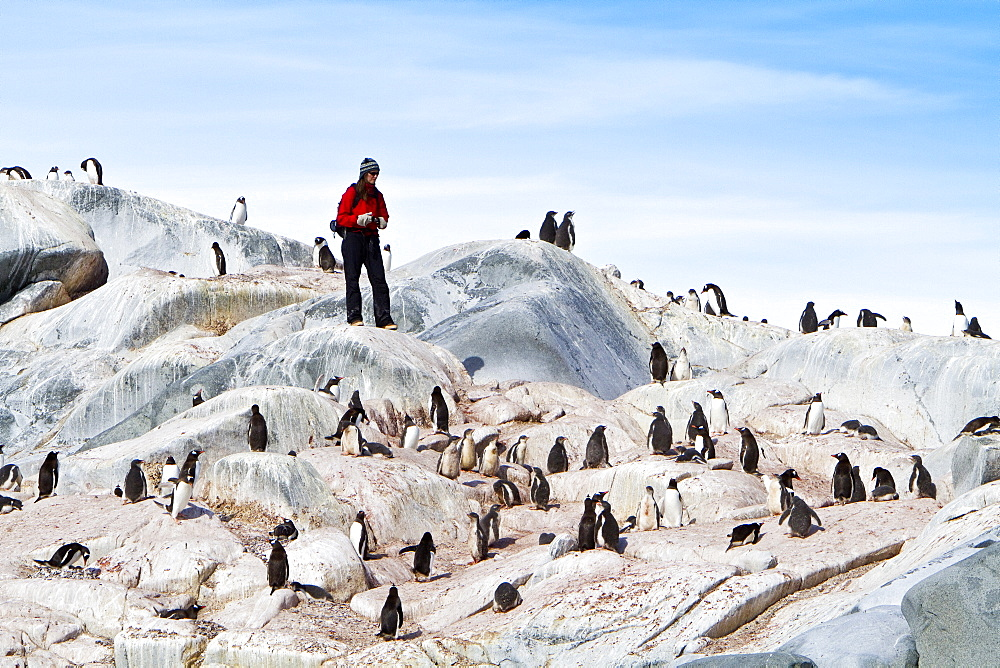 Researchers from OCEANITES counting penguins from the Lindblad Expedition ship National Geographic Explorer (shown here is )working in Antarctica. MORE INFO Lindblad Expeditions pioneered Antarctic travel in December 1969 and remains one of the premier Antarctic Expedition providers to this very day.
