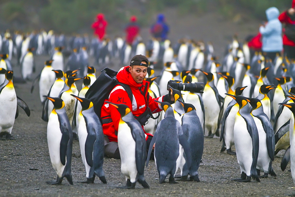 Staff from the Lindblad Expedition ship National Geographic Explorer (shown here is Justin Hofman) working on South Georgia