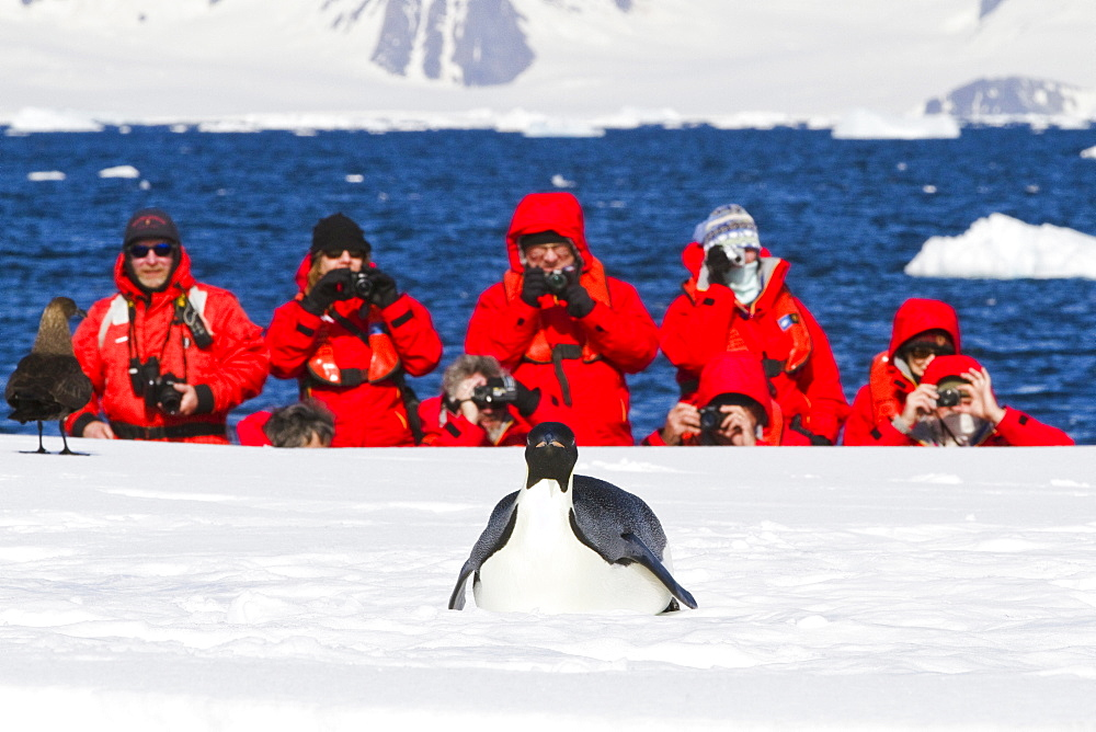Lindblad Expeditions guests with a lone adult emperor penguin (Aptenodytes forsteri) on sea ice in the Gullet between Adelaide Island and the Antarctic Peninsula, Antarctica.