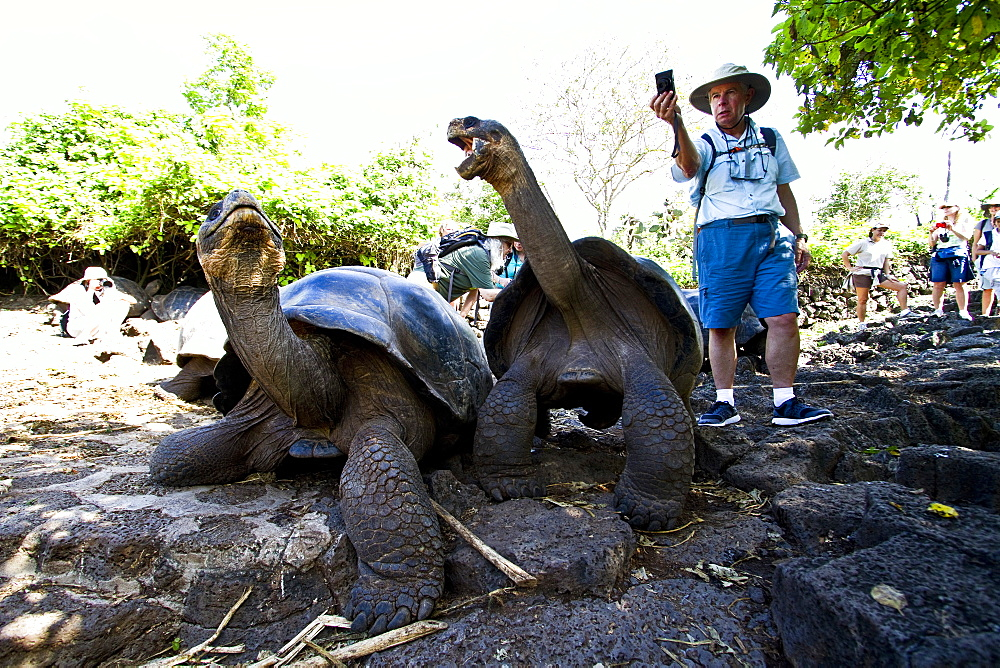 Captive Galapagos giant tortoise (Geochelone elephantopus) with photographer at the Charles Darwin Research Station on Santa Cruz Island in the Galapagos Island Archipelago, Ecuador