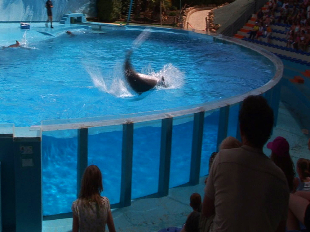 Captive. Bottlenose dolphins (Tursiops truncatus) perform in dolphin show with trainers. Dolphins flip footballs into crowd. Dolphinarium. Faro. Portugal