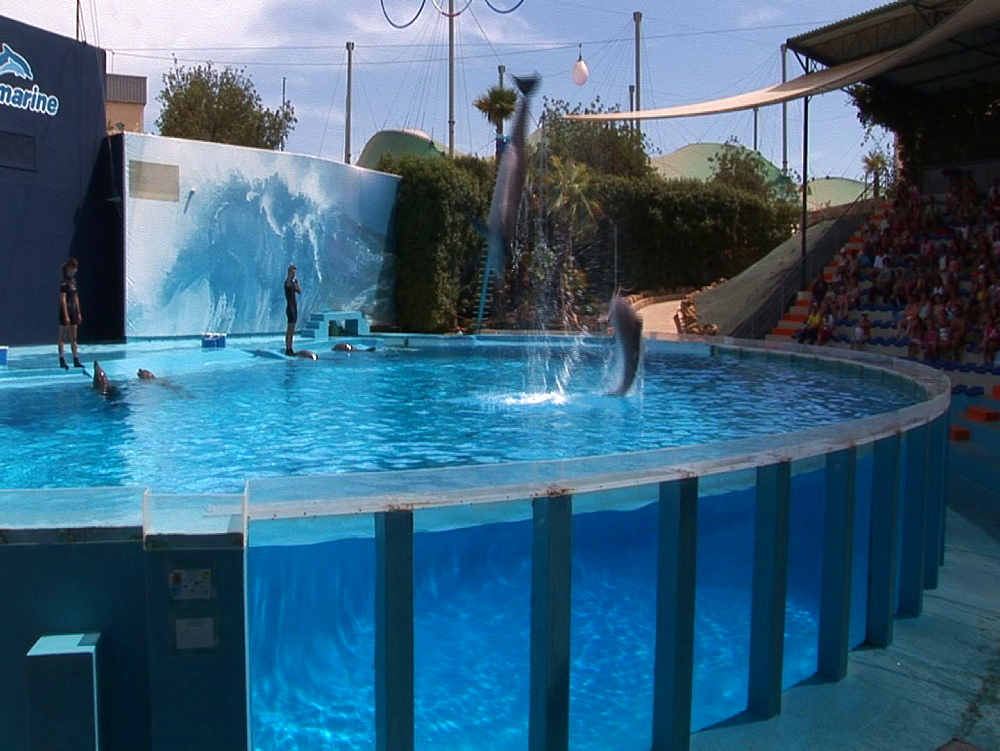 Captive. Bottlenose dolphins (Tursiops truncatus) perform in dolphin show with trainers. Dolphins leap. Dolphinarium. Faro. Portugal