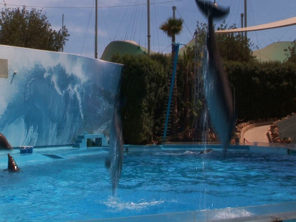 Captive. Bottlenose dolphins (Tursiops truncatus) perform in dolphin show with trainers. Dolphins leap various. Dolphinarium. Faro. Portugal