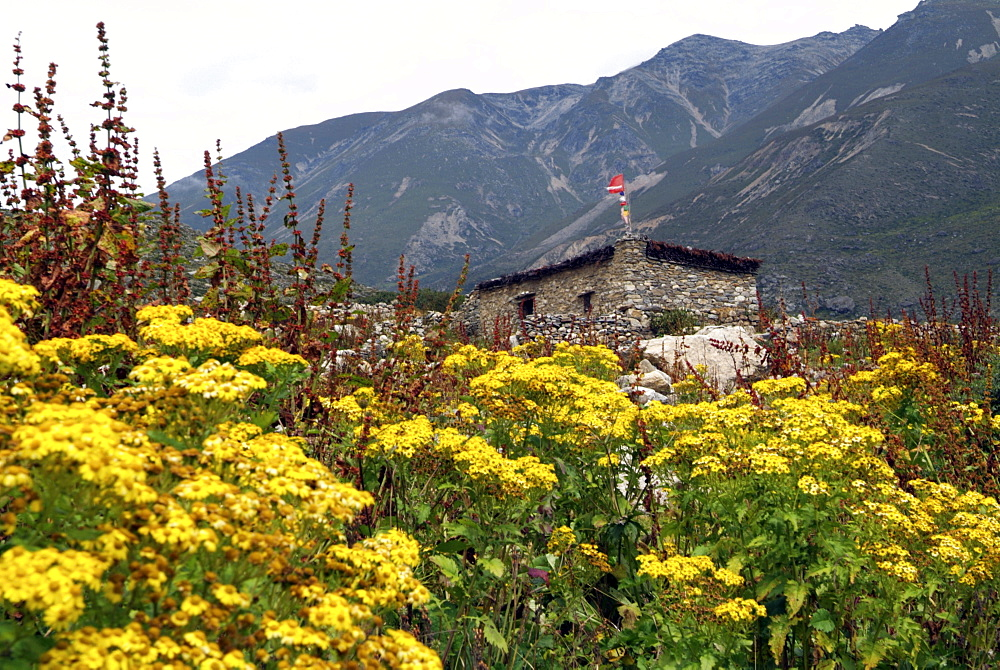 Traditional Building and flowers. Mountains. Himalayas, Tibet. - 986-117